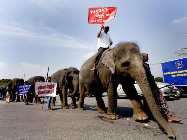 West Bengal,sterlise elephants,wildlife