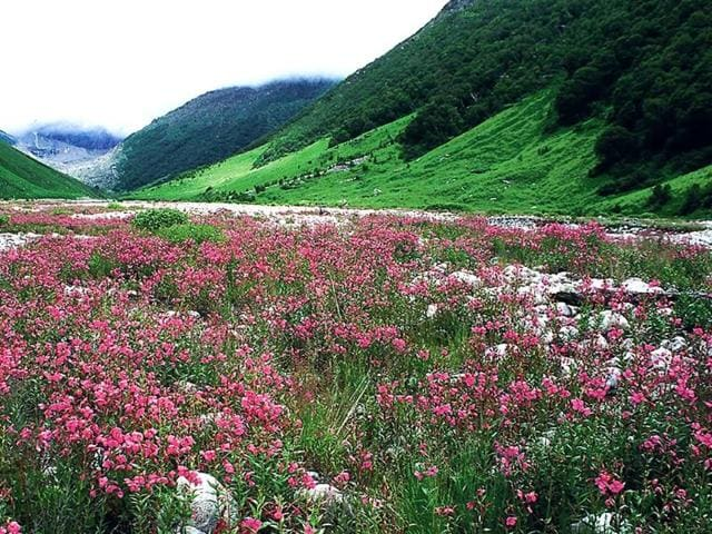 A-view-of-the-Valley-of-Flowers-in-Uttarakhand-HT-Photo