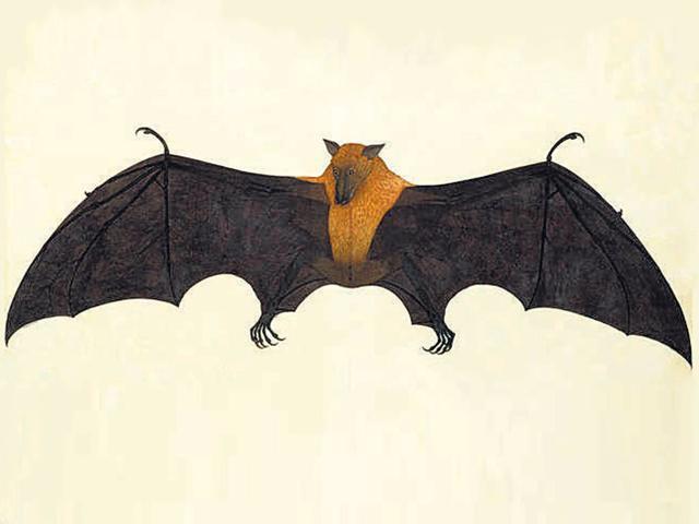 Late-eighteenth-century-painting-of-a-flying-fox-by-the-Calcutta-artist-Bhawani-Das-Photo-courtesy-Bonhams