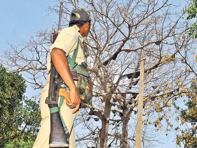 A-security-personnel-looks-at-a-tree-full-of-bee-hives-in-Lohardaga-s-Chiri-where-honeybees-stung-voters-and-officials-and-delayed-the-polling-for-45-minutes-on-Thursday-Diwakar-Prasad-HT-photo