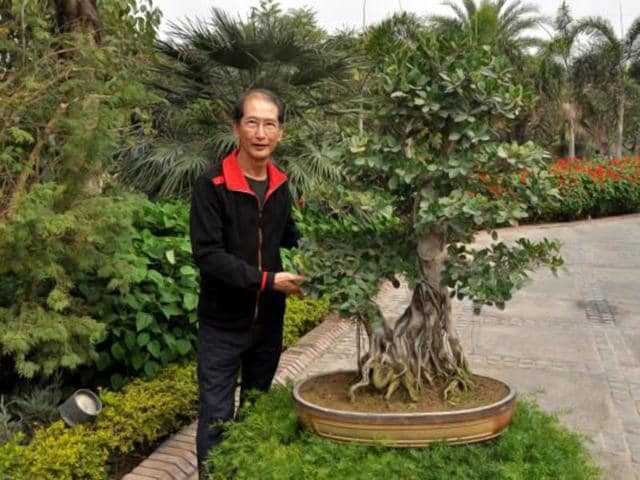 Bonsai-expert-Peter-Chan