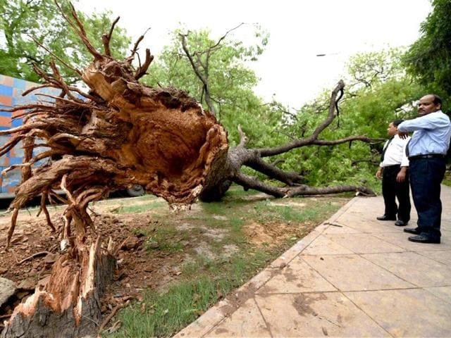 An uprooted tree after a storm accompanied by dark clouds in New Delhi. (PTI photo)