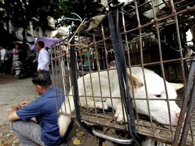 Animal rights,Dog lovers,Yulin dog meat festival
