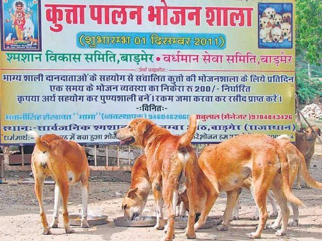 Stray-dogs-enjoy-food-at-the-Kutta-Palan-Bhojan-Shala-in-Barmer-HT-Photo