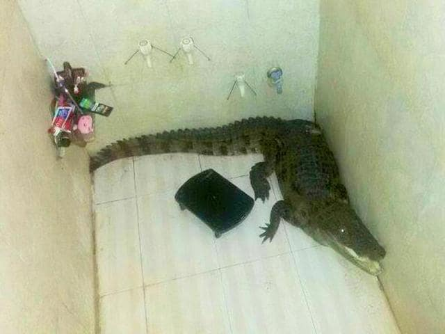 Woman fights of crocodile