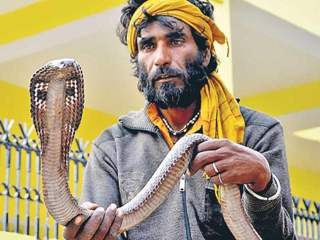 Snake-charmers-have-become-savvy-Now-the-saperas-of-Aligarh-do-not-go-from-door-to-door-but-give-out-the-snakes-on-rent-on-Nag-Panchami-HT-Photo