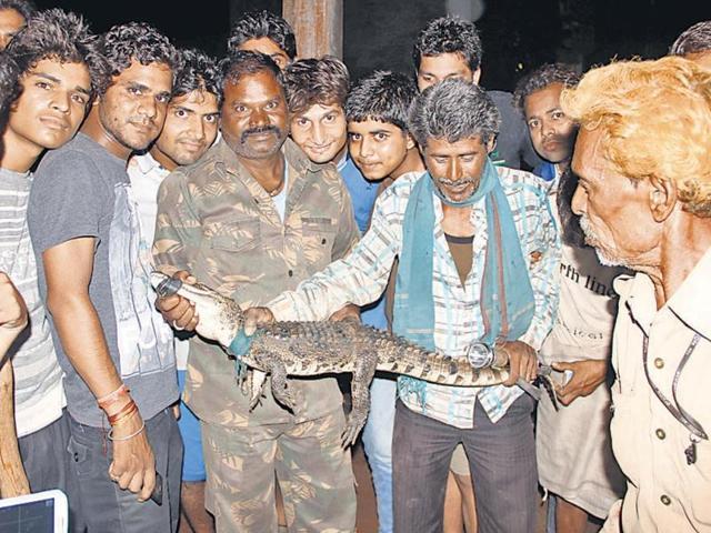crocodiles,Shivpuri,Madhya Pradesh