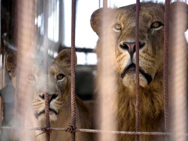 Gaza zoo. Gaza zoo,Israel,Gaza