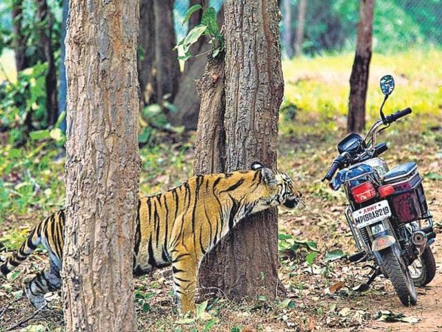 Felling Laws For Environment From Manmohans Govt To Modis Ht