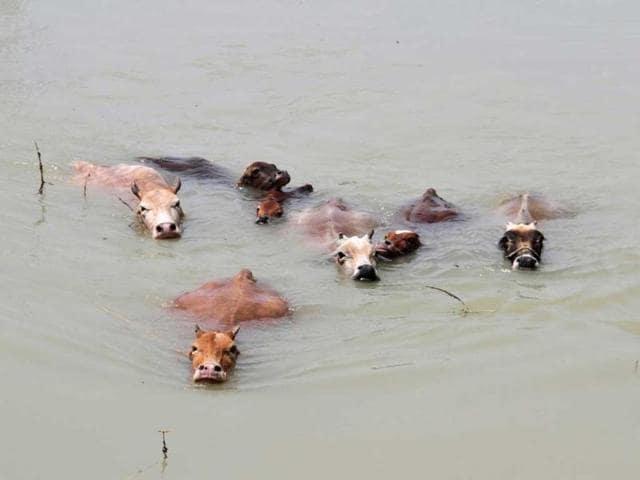 Assam,floods,flooding
