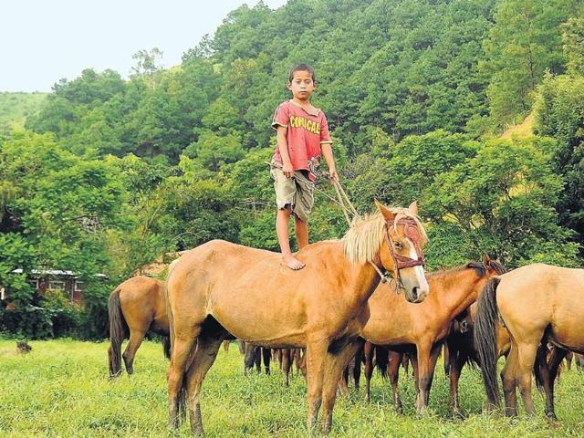 Seven-year-old-Avinash-is-an-expert-bareback-rider-Here-he-s-pictured-on-Bala-his-favourite-pony-Photo-by-CK-Sharma