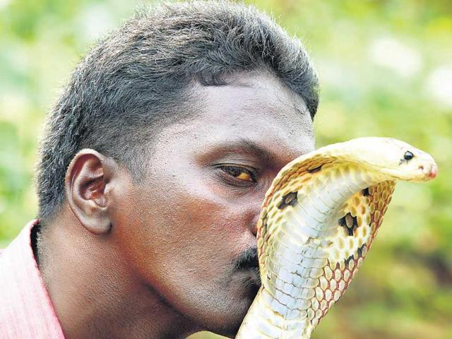 Vava-Suresh--gets-about-25-calls-every-day-from-people-seeking-his-help-to-catch-snakes-Vivek-Nair-HT-Photo