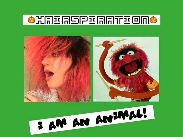 katy perry,red hair,animal
