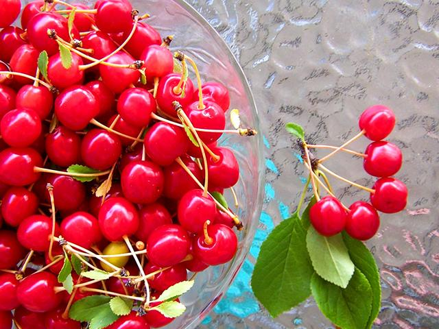 Consumption-of-cherries-lowers-uric-acid-level-in-urine-Photo-Shutterstock
