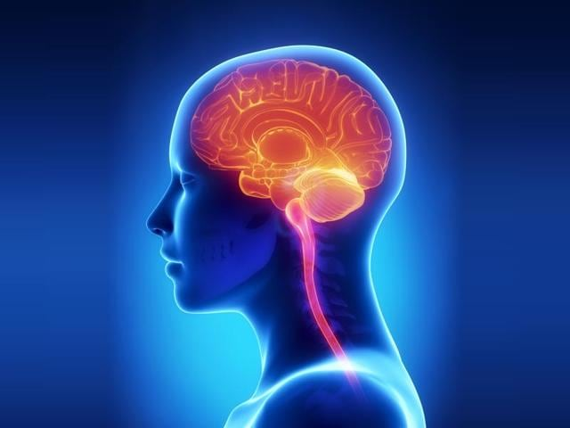 Study-indicates-that-people-do-not-have-to-dedicate-large-amounts-of-time-to-give-their-brain-a-boost-Photo-Shutterstock