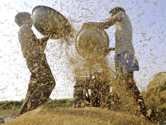 Moga,rice milliers,Food Corporation of India