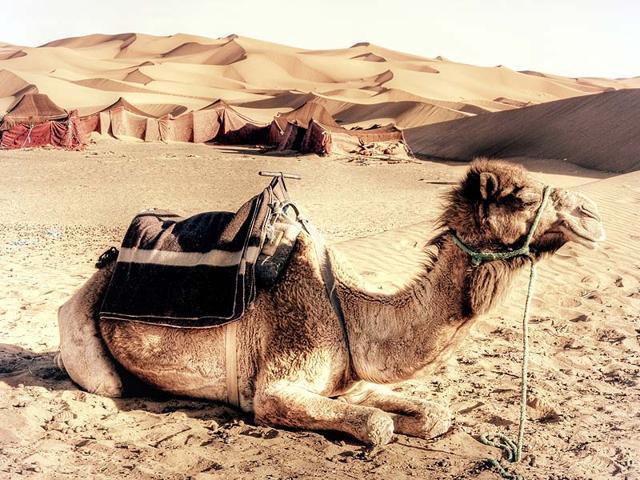 Merzouga,sand bath,Morocco