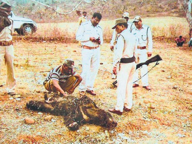 A-bear-killed-by-poachers-in-Betul-district-of-Madhya-Pradesh-HT-file-photo