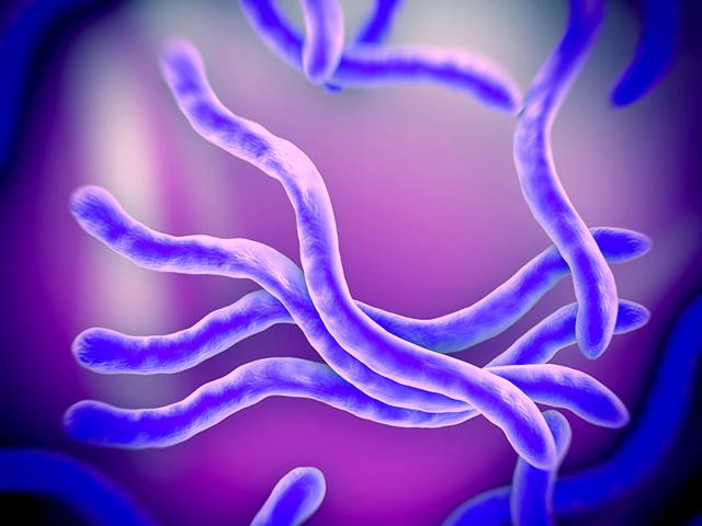 Christensenellaceae-also-called-gut-bacteria-thrives-in-our-body-based-on-our-genes-Shutterstock