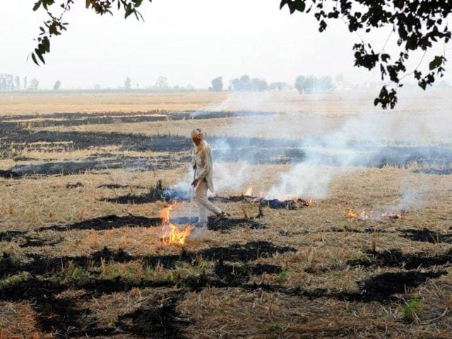 A-farmer-burning-paddy-stubble-at-Bakshiwal-village-on-Bhadson-road-on-Tuesday-Bharat-Bhushan-HT-Photo