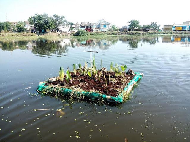 A-floating-island-set-up-at-Lasudia-Mori-lake-in-Indore-HT-photo