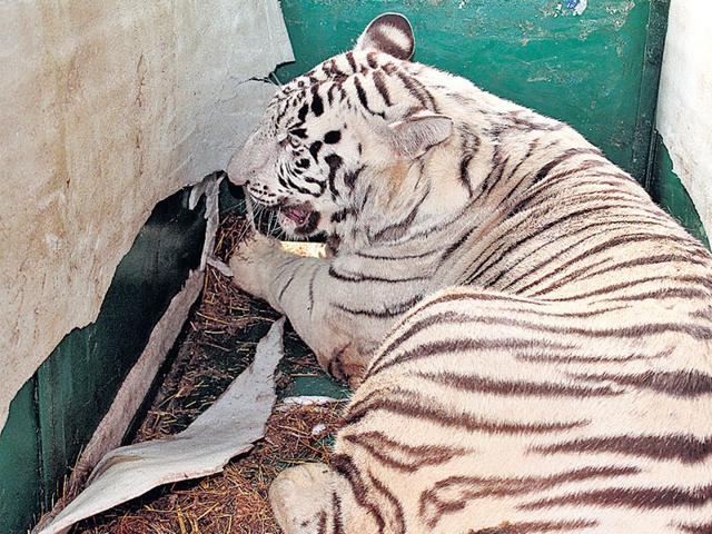 CBI arrests notorious tiger poacher from Katni in Madhya Pradesh