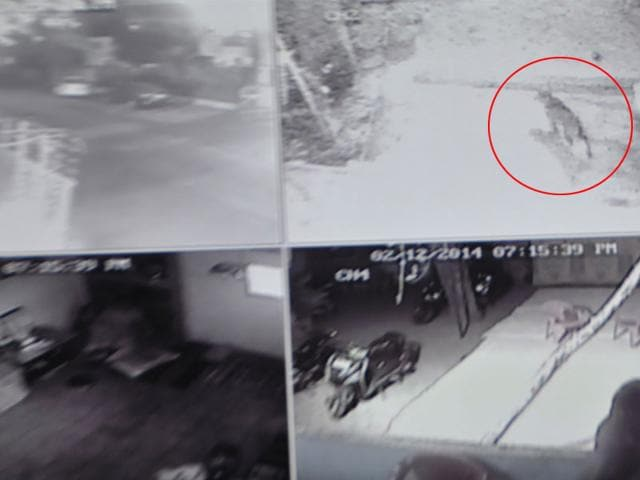 CCTV-grab-of-the-panther-cub-spotted-in-Radio-Colony-near-Residency-area-of-Indore-on-Thursday