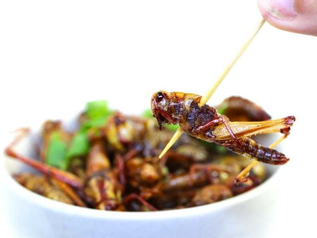 insect superfood