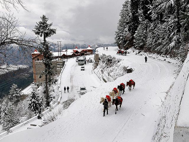 A-man-walks-with-his-ponies-during-the-season-s-first-snowfall-at-Kufri-AFP-Photo