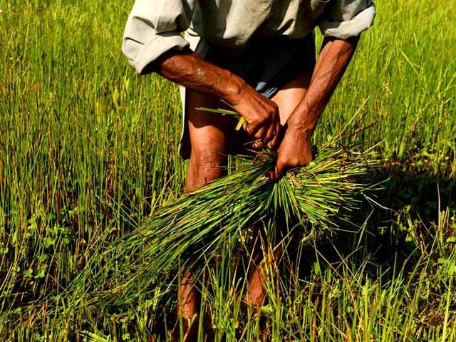 Missing-seasonal-rain-and-an-unusually-warm-winter-have-impacted-winter-sowing-And-farmers-have-cut-down-the-area-under-cultivation-due-to-poor-soil-moisture-File-Photo
