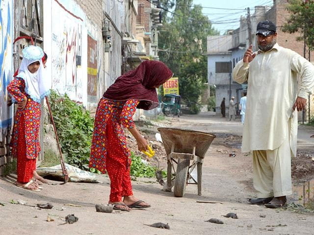Pakistani-resident-Naseer-Ahmad-watches-his-daughter-as-she-collects-dead-rats-in-a-residential-area-of-Peshawar-AFP-Photo