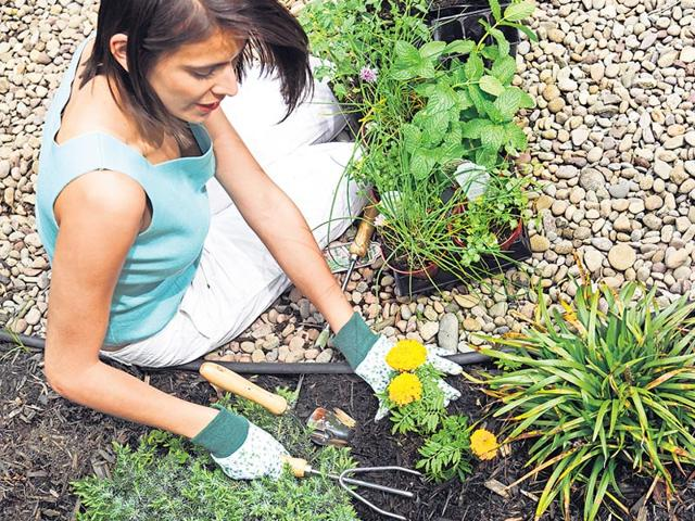 Sow good: Tips to build your own kitchen garden