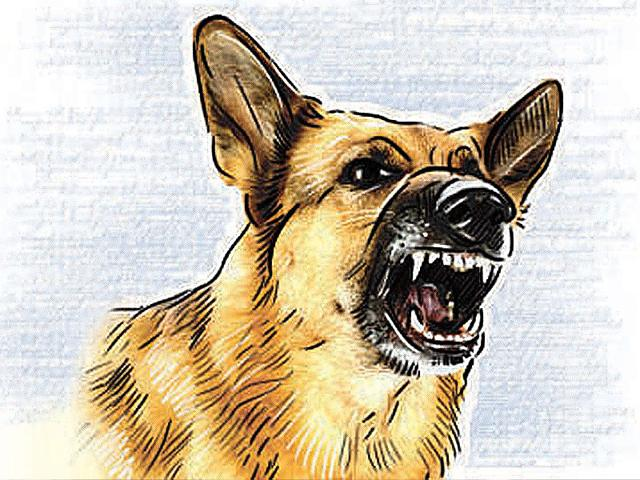 An-illustration-of-a-stray-dog-HT-illustrator