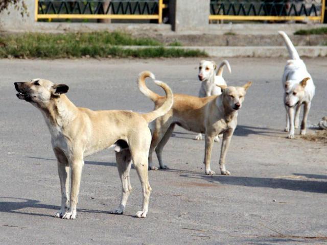 Mandi: 70 stray dogs neutered in Bir area