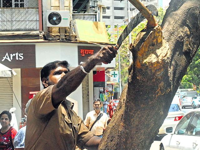 National Green Tribunal BMC,rain trees,trees in mumbai
