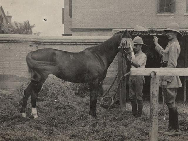 Chandigarh,warhorse,Sikh