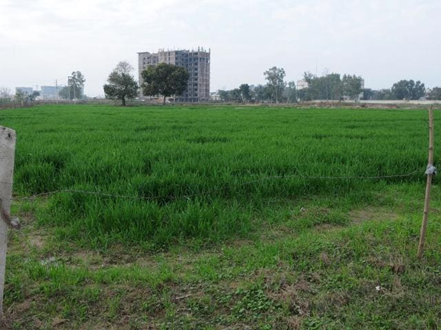 A-view-of-the-land-in-Sectors-76-80-in-SAS-Nagar-on-Friday-Gurminder-Singh-HT