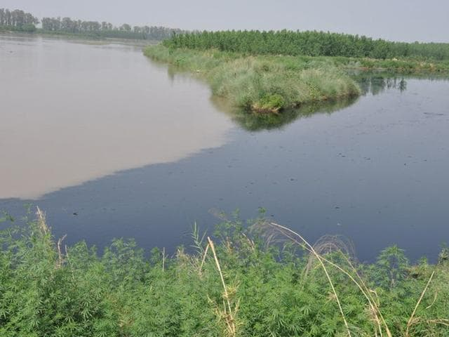 The-confluence-of-a-Sutlej-blackened-by-pollution-with-a-relatively-clean-Beas-at-Harike-HT-photos