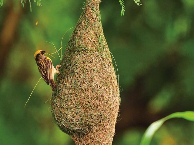 bird sightings,bird races,Mumbai BirdRace