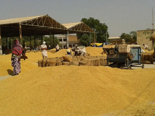 Punjab,paddy procurement,Punjab Mandi Board