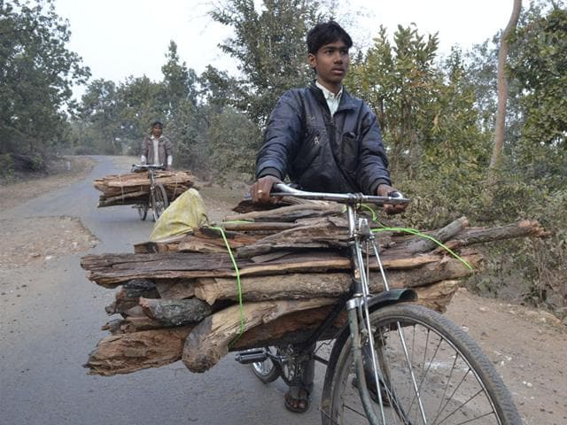 Villagers-on-their-way-to-home-with-dry-wood-from-Mahan-Mujeeb-Faruqui-HT-photo