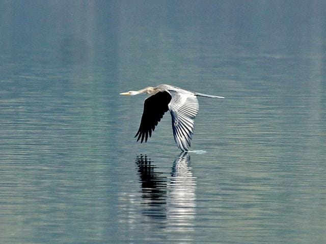 Darter-was-spotted-by-Avinash-Bhagat-at-Mumbai-Bird-Race