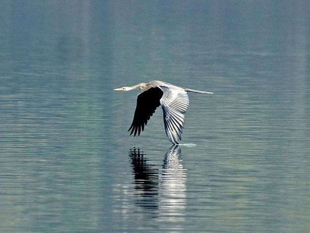 Rupnagar,Chandigarh Bird Club,World Wildlife Fund
