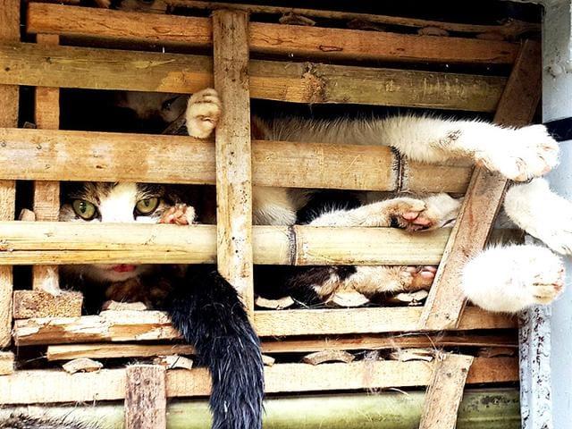 Cats,vietnam cats,cats killed