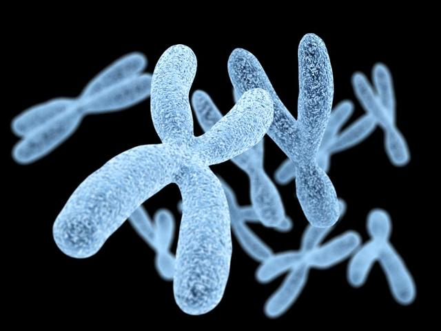 chromosomes,XY chromosomes,XY chromosomes