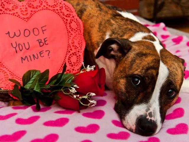Spread-love-this-Valentine-s-Day-everywhere-Shutterstock