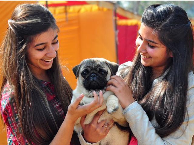 Local-residents-enjoying-a-day-out-with-their-four-legged-friends-at-the-Chandigarh-Kennel-Club-s-dog-show-Karun-Sharma-HT