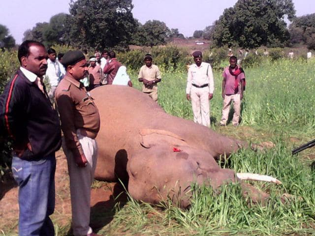 The-carcass-of-an-elephant-in-Sidhi-district-on-Saturday-HT-photo