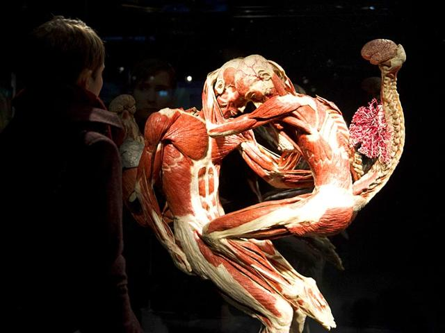 A-visitor-looks-at-plastinated-human-bodies-during-a-press-preview-prior-to-the-opening-of-Body-Worlds-permanent-exhibition-by-German-anatomist-Gunther-von-Hagens-at-the-Menschen-Musem-in-Berlin-Reuters-Photo