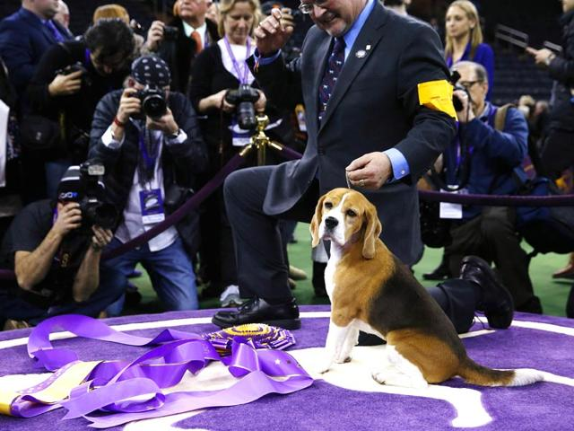 Handler-William-Alexander-holds-Miss-P-a-15-inch-Beagle-who-won-Best-in-Show-at-the-139th-Westminster-Kennel-Club-Dog-Show-at-Madison-Square-Garden-in-the-Manhattan-borough-of-New-York-Reuters-Photo